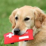 Seminar: Urgent Care for Dogs: To Vet, or Not to Vet