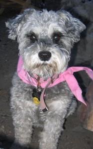 Maya in pink bandana
