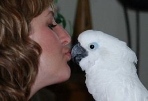 umbrella cockatoo gets kisses