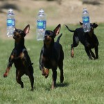 terriers with water bottles