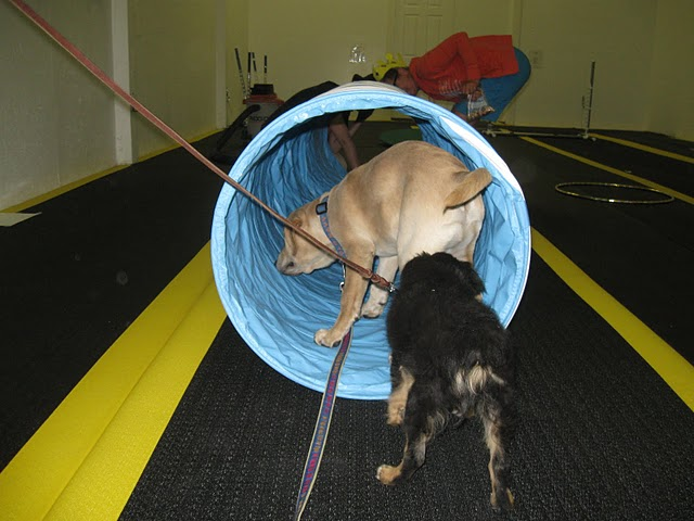 puppies in tunnel