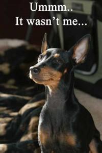boredom and destruction happen when dogs are home alone!