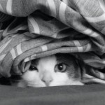 Teach your pet to play Hide and Seek