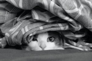 cat in sheets